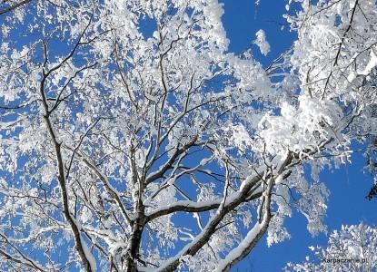 Drzewo zimową porą
